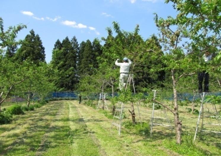 自然満喫 農作業体験(茂木農園)