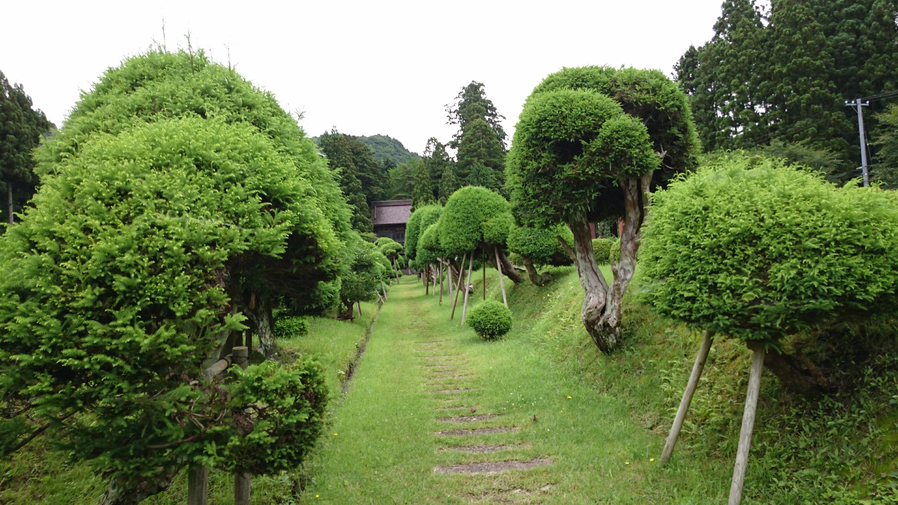 キノコ杉に会いに行ってきました。