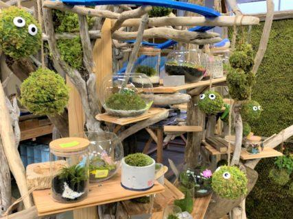 苔と流木を使った制作体験